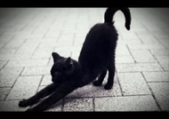 福山キャバクラ 花鳥風月 あゆ 「【猫の日】」のブログを見る