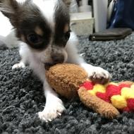 福山キャバクラ club BEET いつか 「愛犬*」のブログを見る