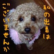 福山キャバクラ 月世界 みなみ 「祖母と犬と私」のブログを見る